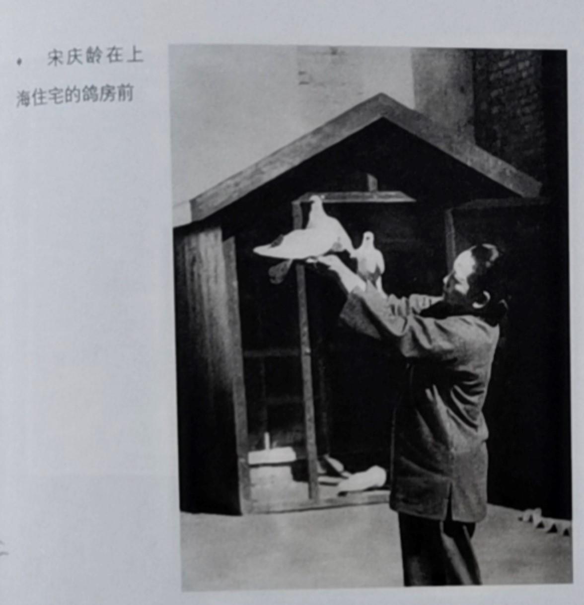 宋庆龄喂鸽子